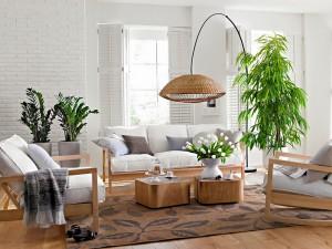 Cómo iluminar las plantas interiores de tu hogar