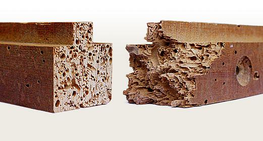 Problemas de la madera la carcoma - Como eliminar la polilla de la madera ...